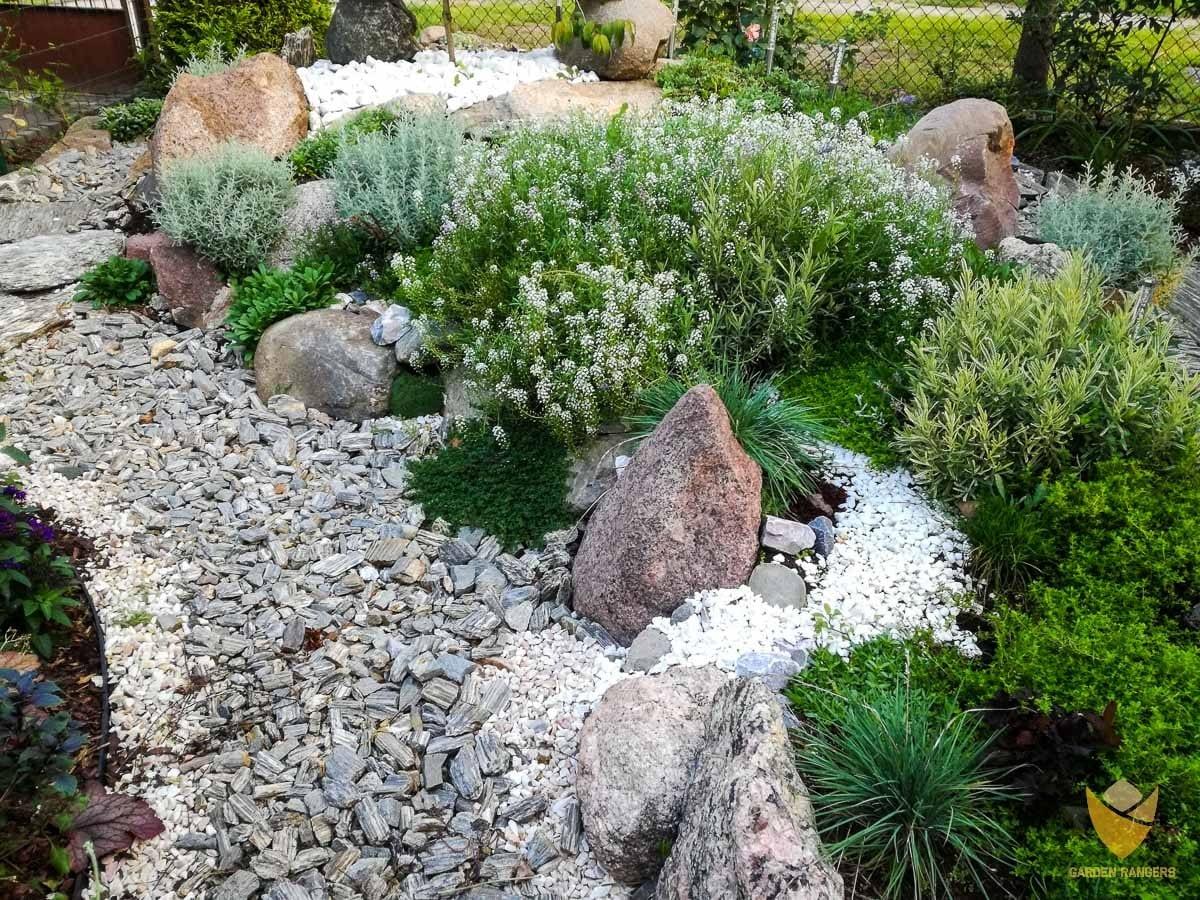 rośliny na kamiennych rabatach