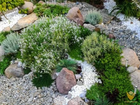 Skalny ogród z ziołami
