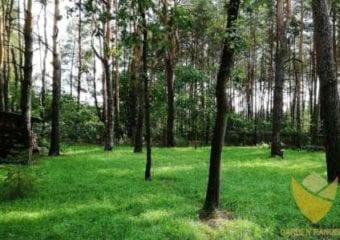 Leśny trawnik
