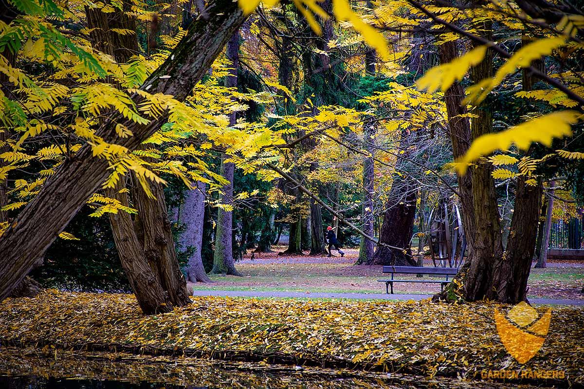 wizualna ocena kondycji starych drzew