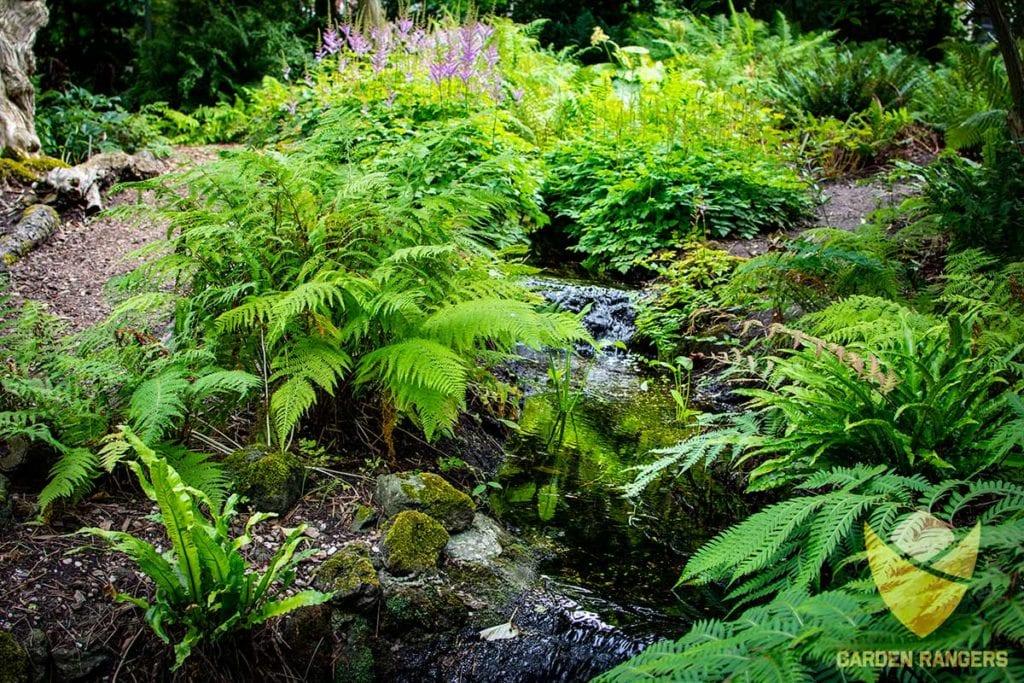 dziki ogrod strumyk plynacy wsrod zieleni
