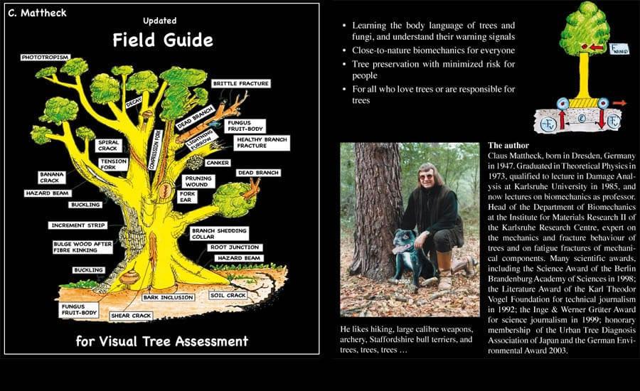 ocena stanu zdrowia drzewa