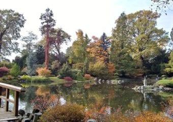 Ogród japoński jesienią