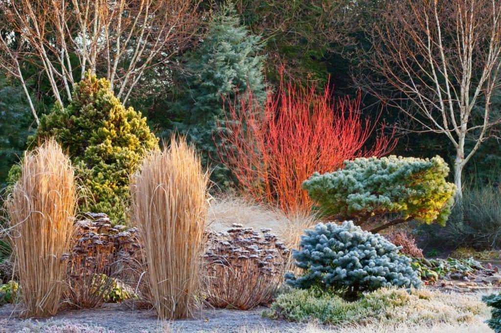 Ogród piękny zimą