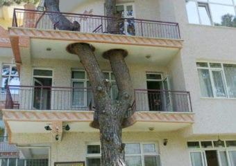 Architektura w starciu z przyrodą