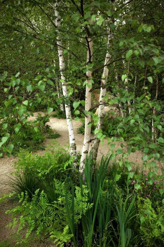 Naturalna rabata z brzozą