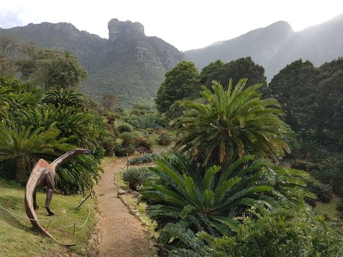Cykasy w Kirstenbosch