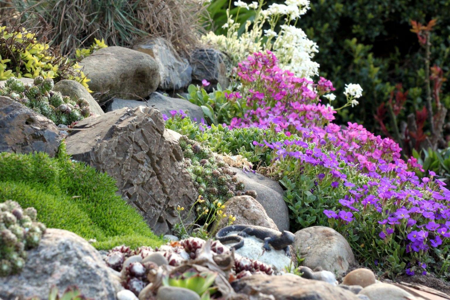 rośliny w ogródku skalnym