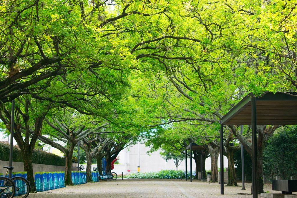 Projektowanie zieleni miejskiej